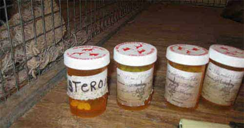 Drugs in dog racing