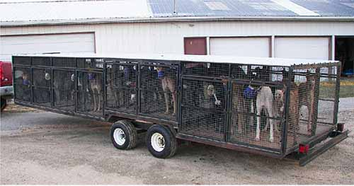 Transportation - greyhounds are transported to a dog track