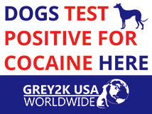 Dogs Test Positieve for Cocaine Here