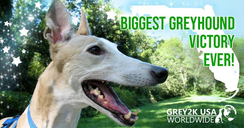Greyhound Racing Usa