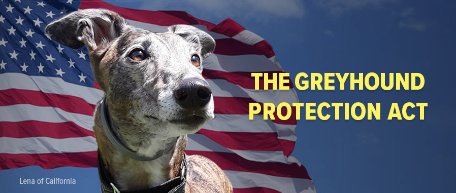 Greyhound Protection Act - H.