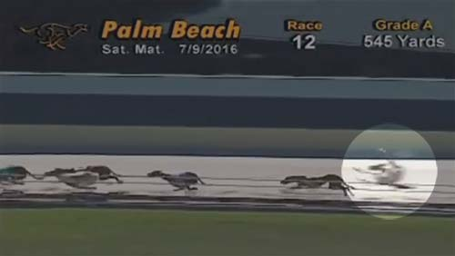 Repeal the law requiring Florida gambling facilities to offer greyhound racing