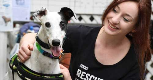 Quotes About Greyhound Racing   GREY2K USA Worldwide