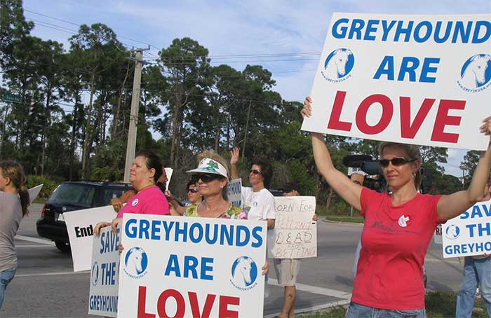 greyhound racing rally volunteers