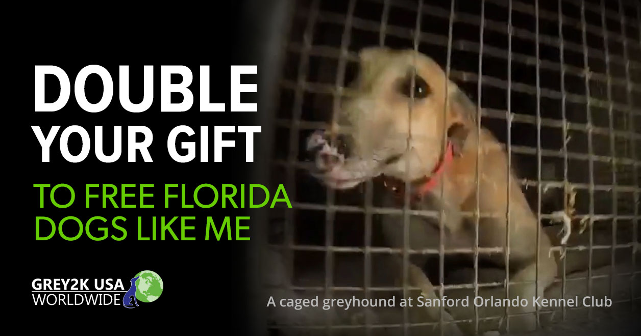 double your gift to free florida dogs like me