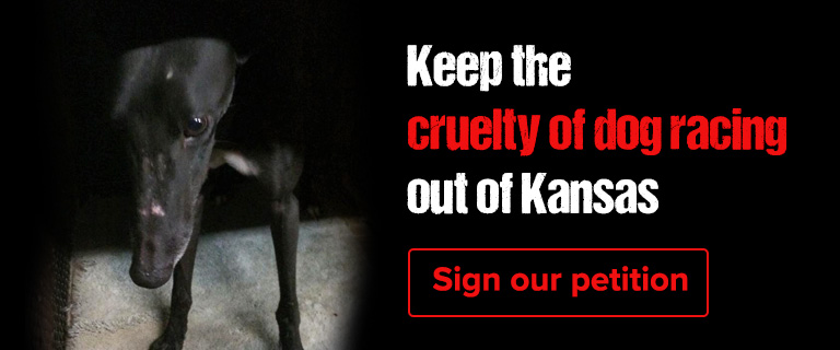 Dog racing is a bad bet for Kansas. Sign our petition.
