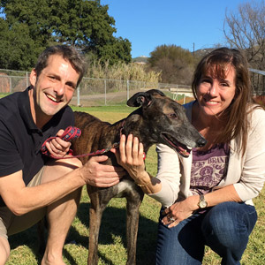 more about greyhound adoption