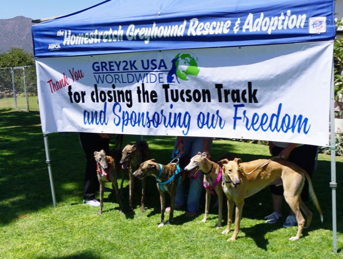 Tucson Greyhound Park dogs arrive for adoption