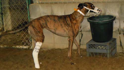 Stop Subsidizing Greyhound Racing in West Virginia