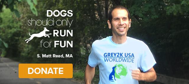 Dogs should only run for fun DONATE