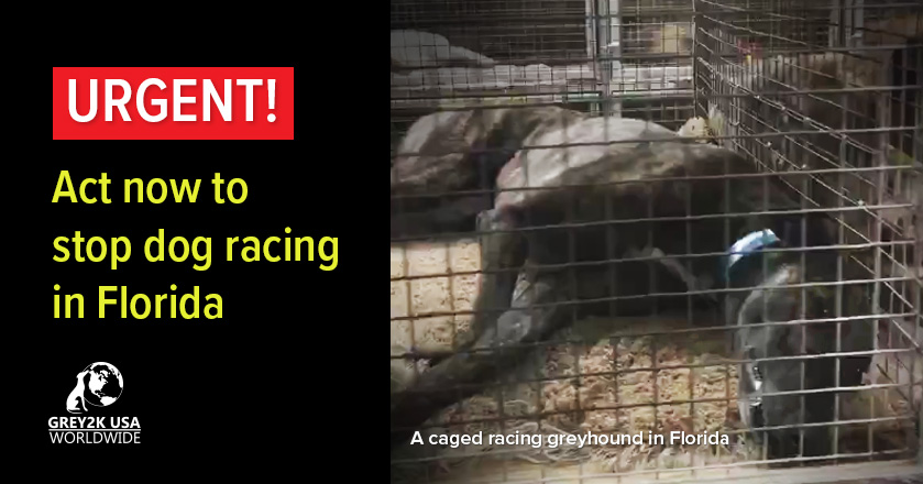 URGENT! Act now to stop dog racing in Florida