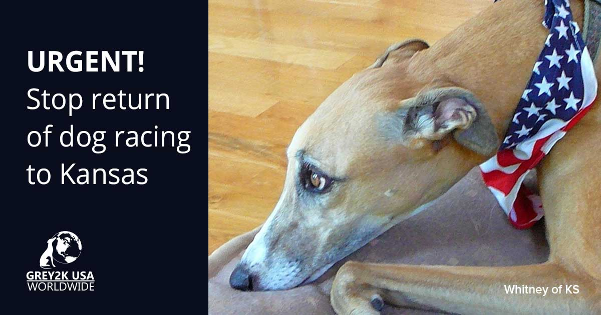 URGENT! Stop return of dog racing to Kansas