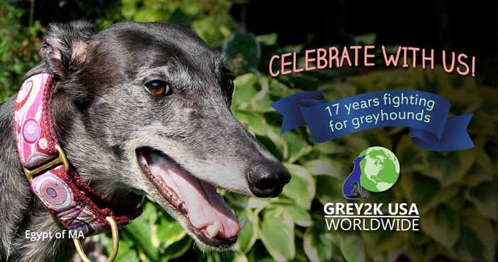 CELEBRATE WITH US! 17 years fighting for greyhounds