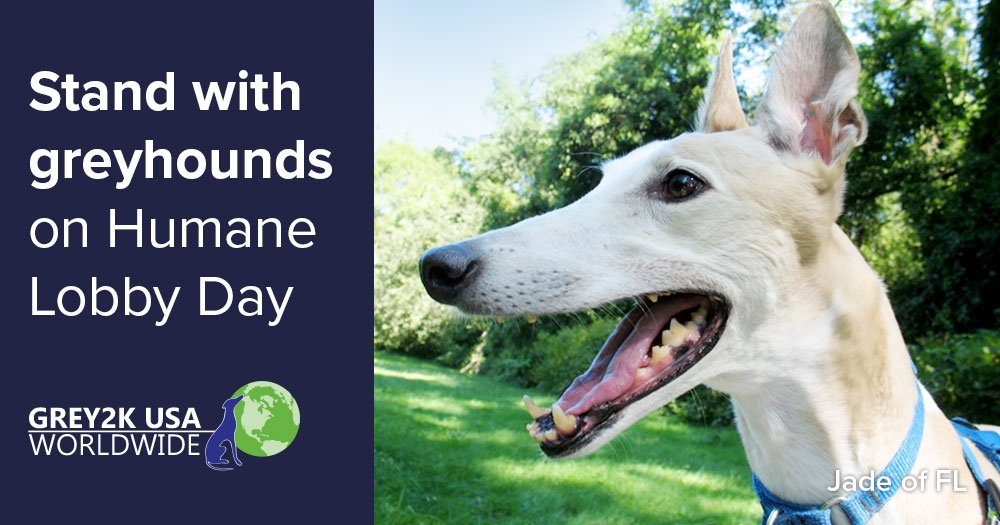 Stand with greyhounds