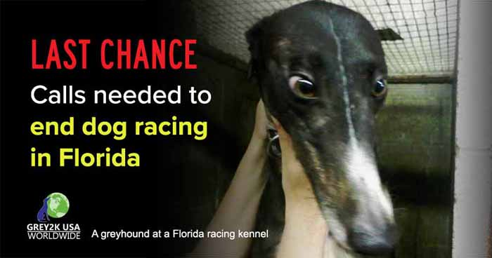 LAST CHANCE Calls needed to end dog racing in Florida