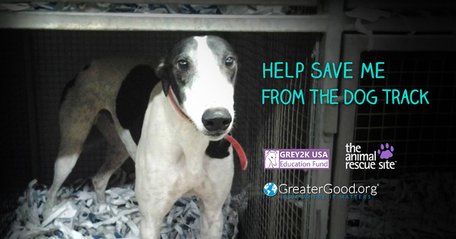 Help save me from the dog track