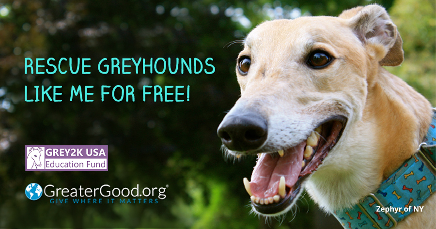 Rescue greyhounds for free!