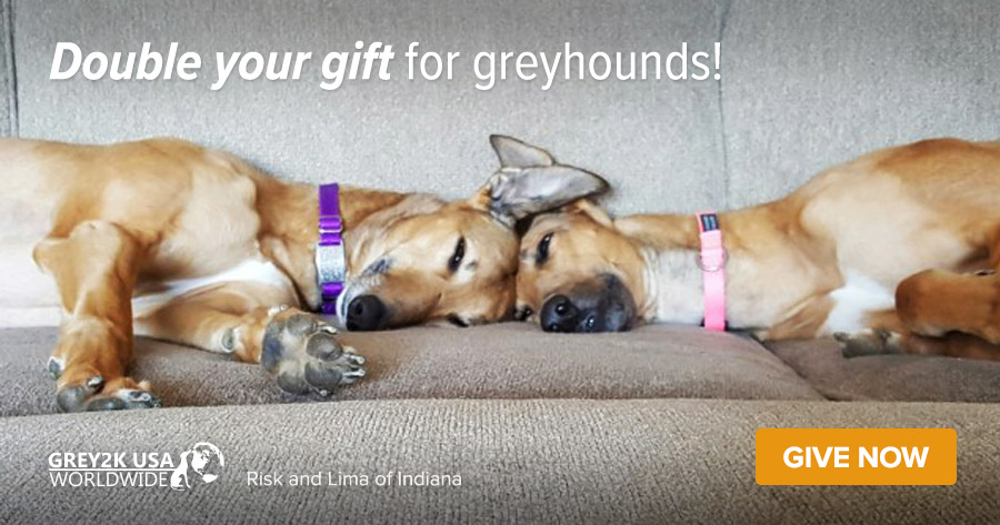 Double your gift for greyhounds!