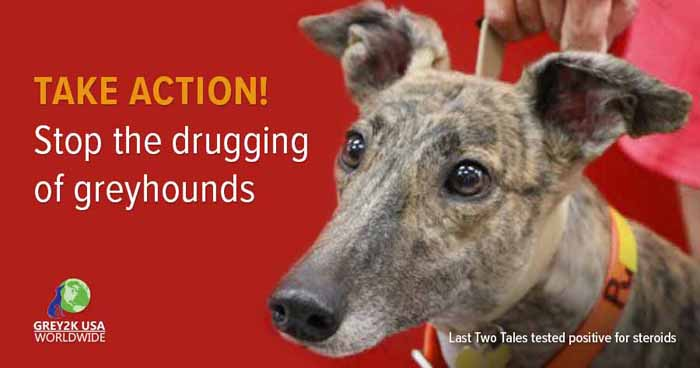 TAKE ACTION: Stop the drugging of greyhounds