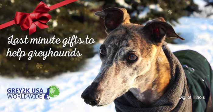 Last minute gifts to help greyhounds