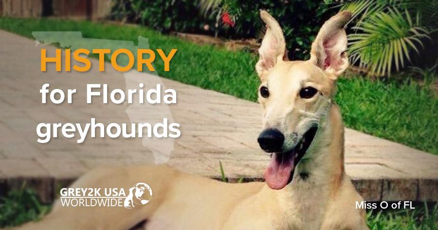 History for Florida greyhounds