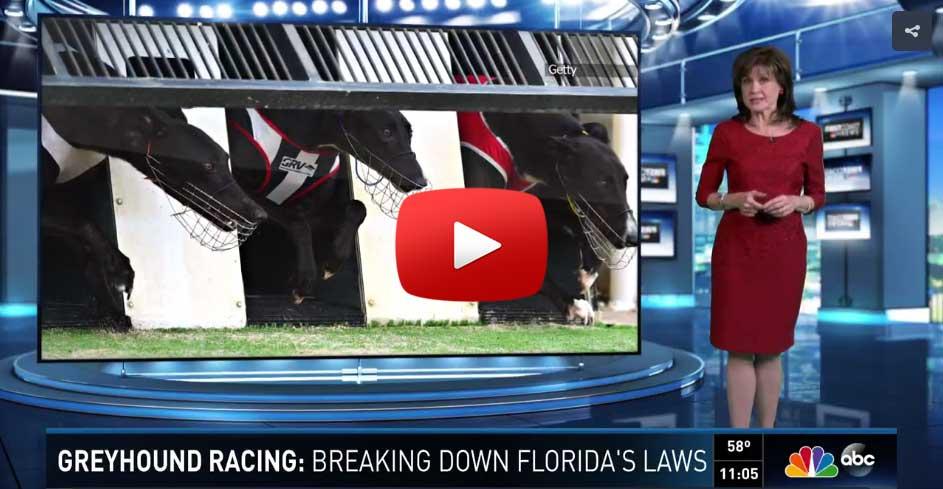 First Coast News florida greyhound racing