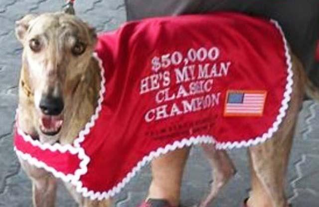 Greyhound Janice Dean